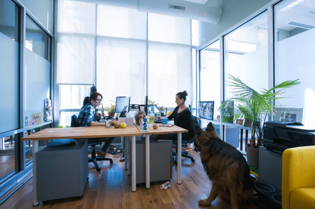green desk coworking space in brooklyn, new york